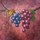 Compaq's Italian Campaign Grapes • Casein on Board